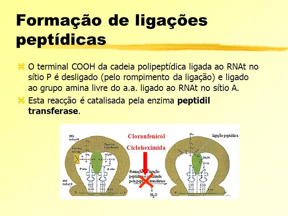 Formação de ligações peptídicas