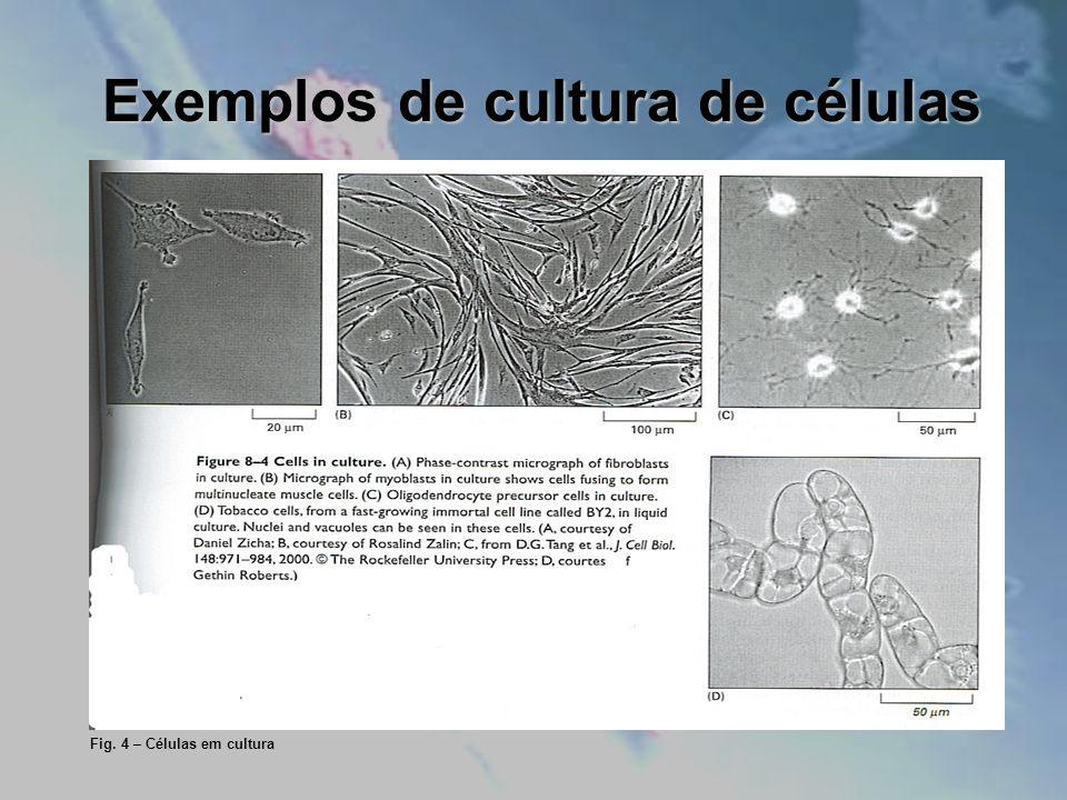 Exemplos de cultura de células