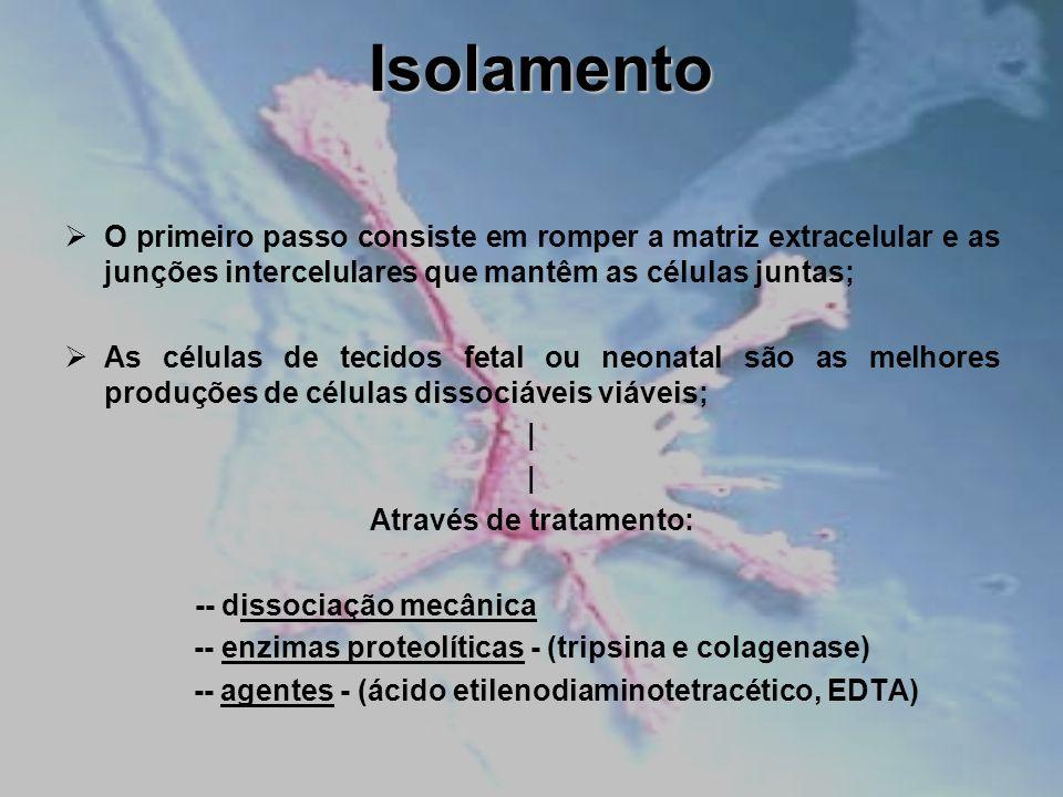 Isolamento O primeiro passo consiste em romper a matriz extracelular e as junções intercelulares que mantêm as células juntas;