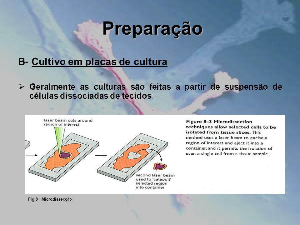 Preparação B- Cultivo em placas de cultura