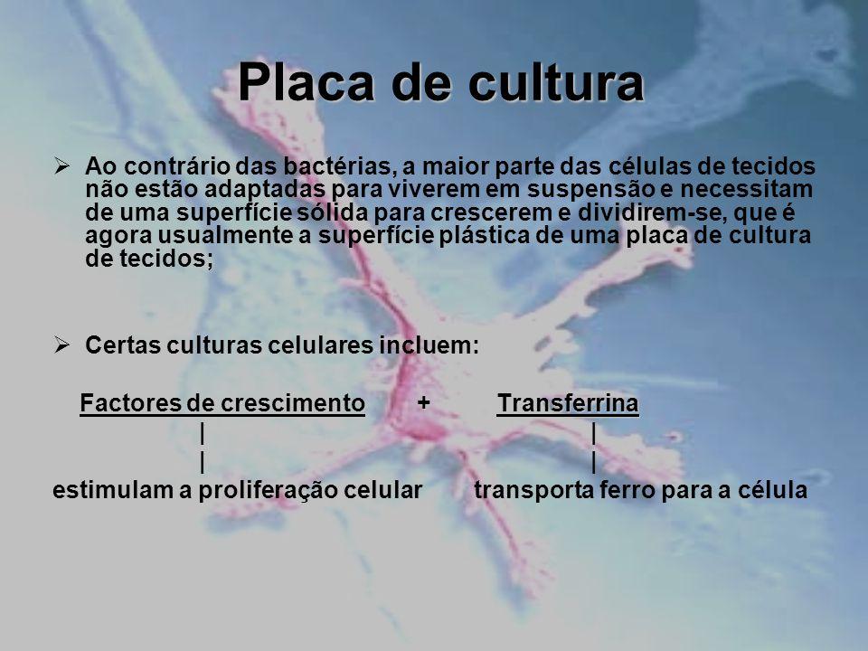 Placa de cultura