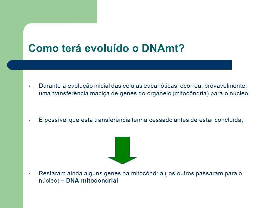 Como terá evoluído o DNAmt