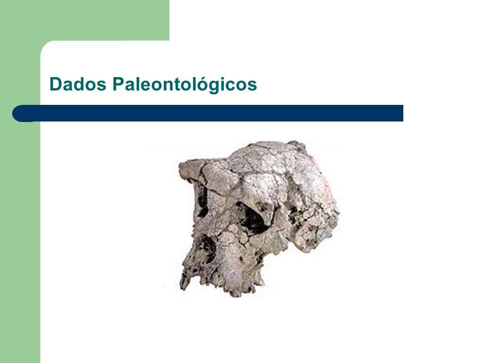 Dados Paleontológicos