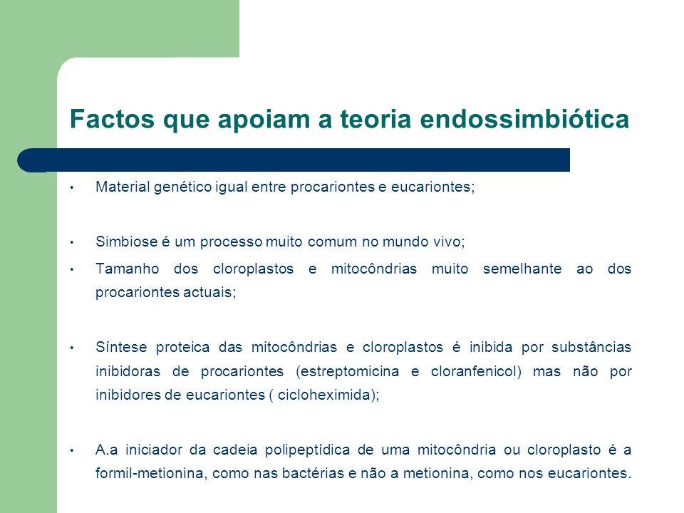 Factos que apoiam a teoria endossimbiótica