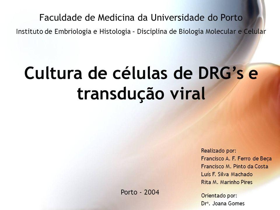 Cultura de células de DRG's e transdução viral