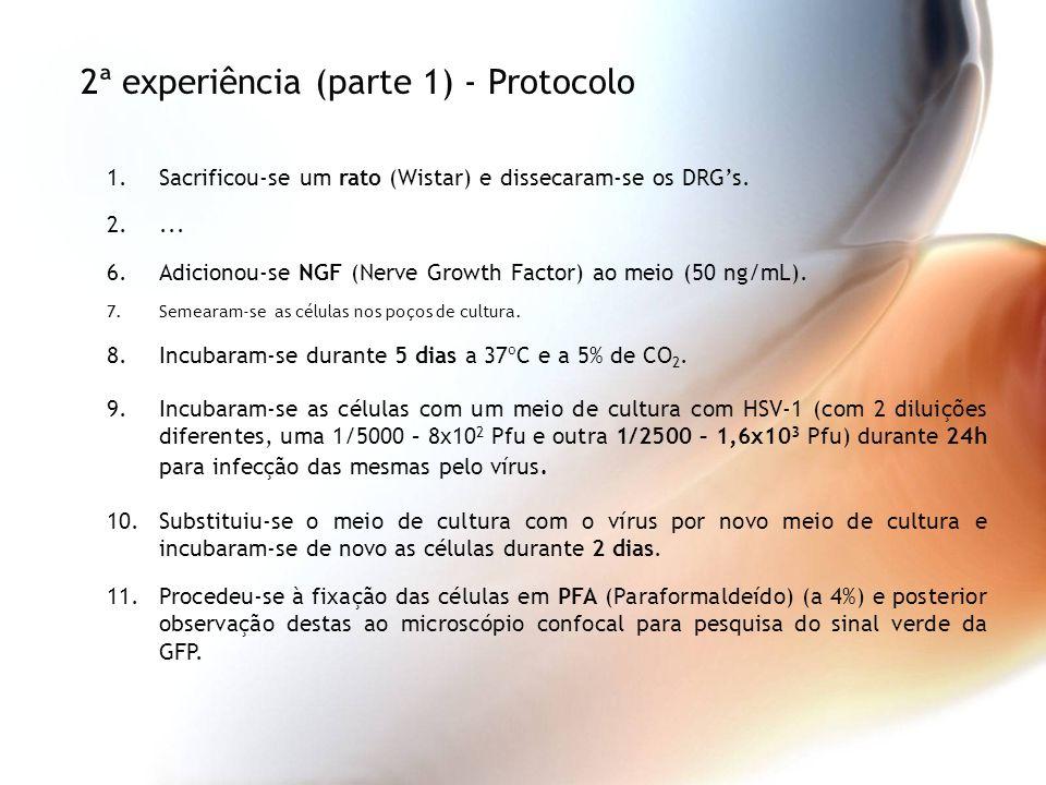 2ª experiência (parte 1) - Protocolo
