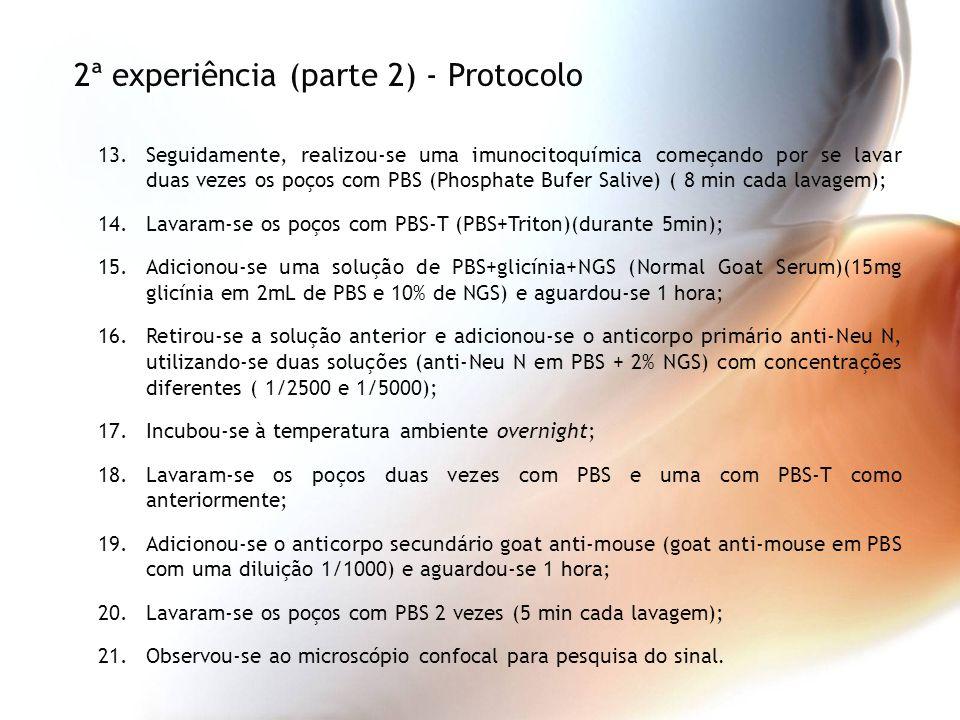 2ª experiência (parte 2) - Protocolo
