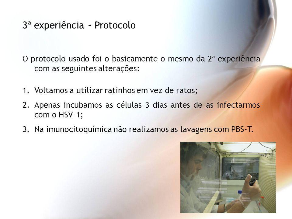 3ª experiência - Protocolo
