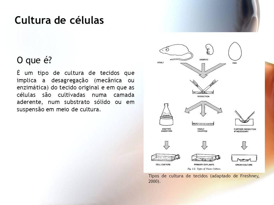 Cultura de células O que é