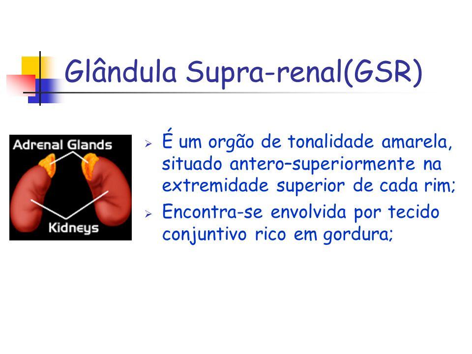 Glândula Supra-renal(GSR)