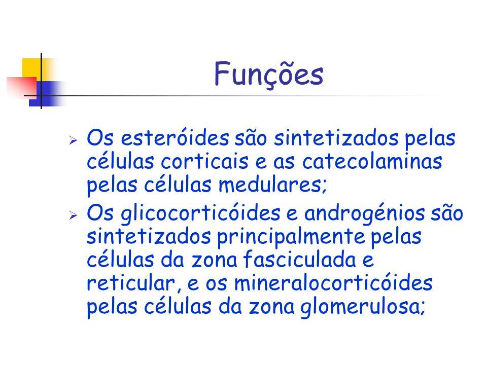 Funções Os esteróides são sintetizados pelas células corticais e as catecolaminas pelas células medulares;
