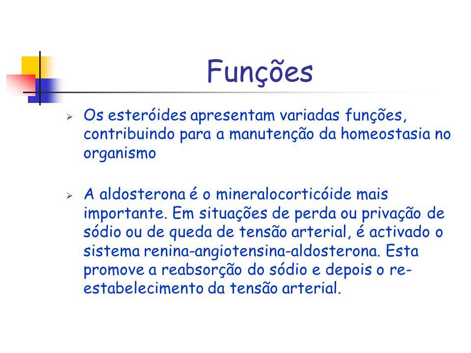 Funções Os esteróides apresentam variadas funções, contribuindo para a manutenção da homeostasia no organismo.