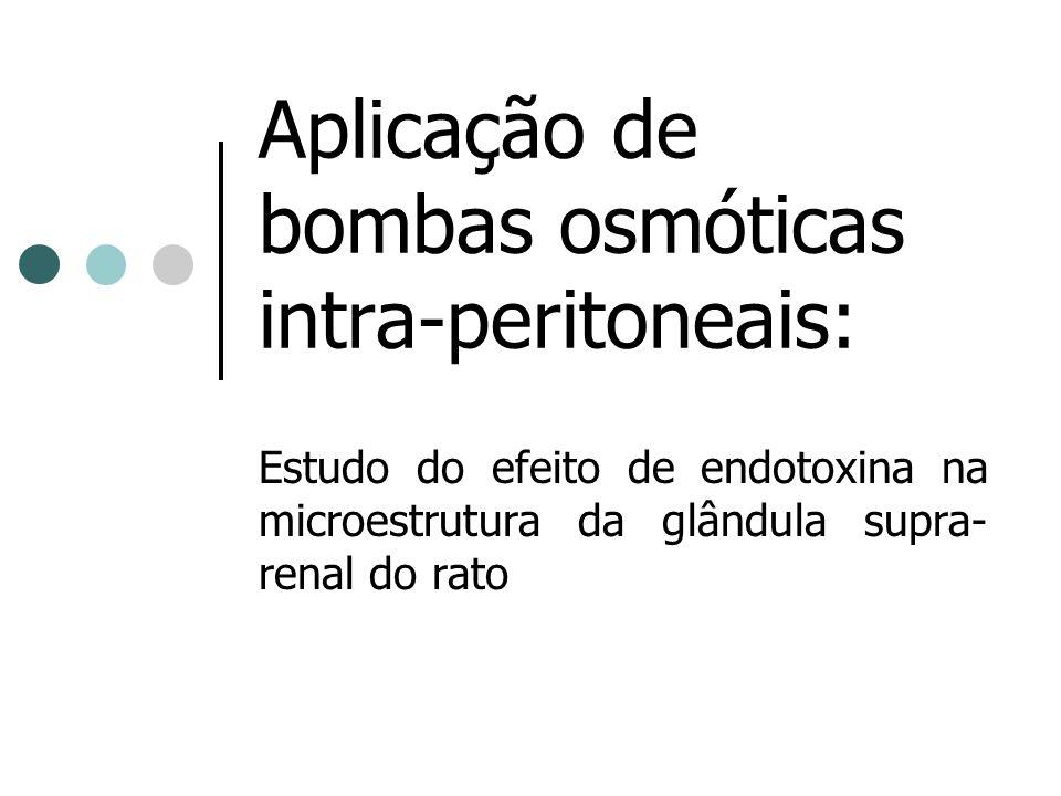 Aplicação de bombas osmóticas intra-peritoneais: