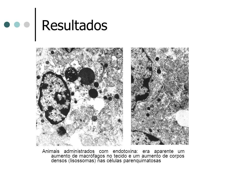 Resultados Tecnicas de microscopia