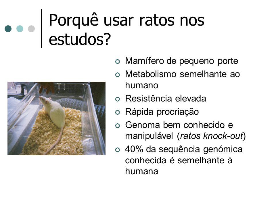 Porquê usar ratos nos estudos