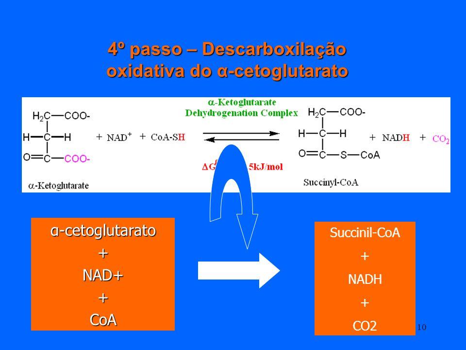 4º passo – Descarboxilação oxidativa do α-cetoglutarato