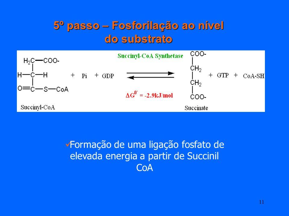5º passo – Fosforilação ao nível do substrato