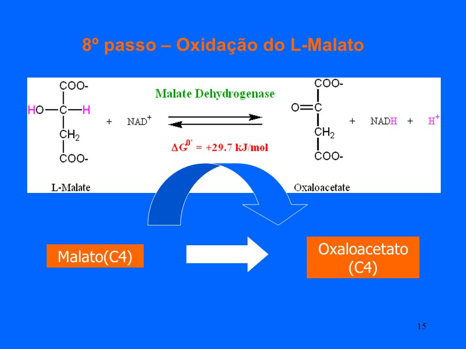 8º passo – Oxidação do L-Malato