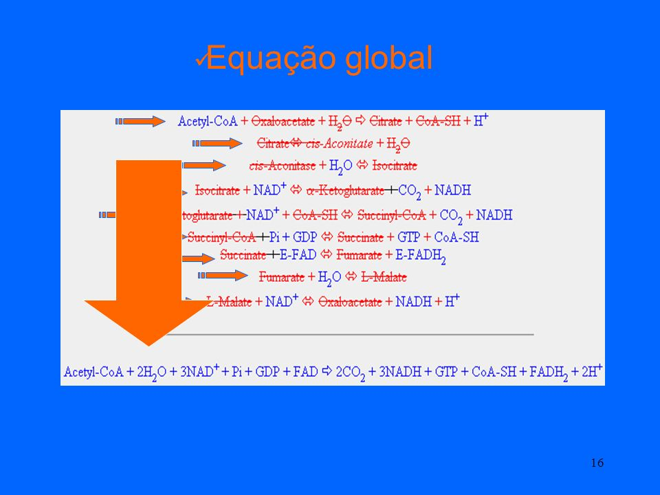 Equação global