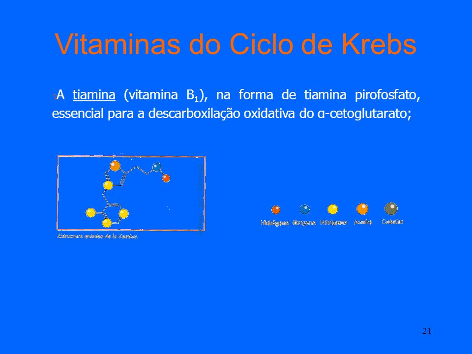 Vitaminas do Ciclo de Krebs