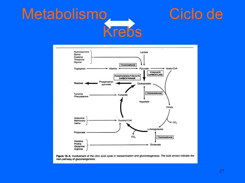 Metabolismo Ciclo de Krebs