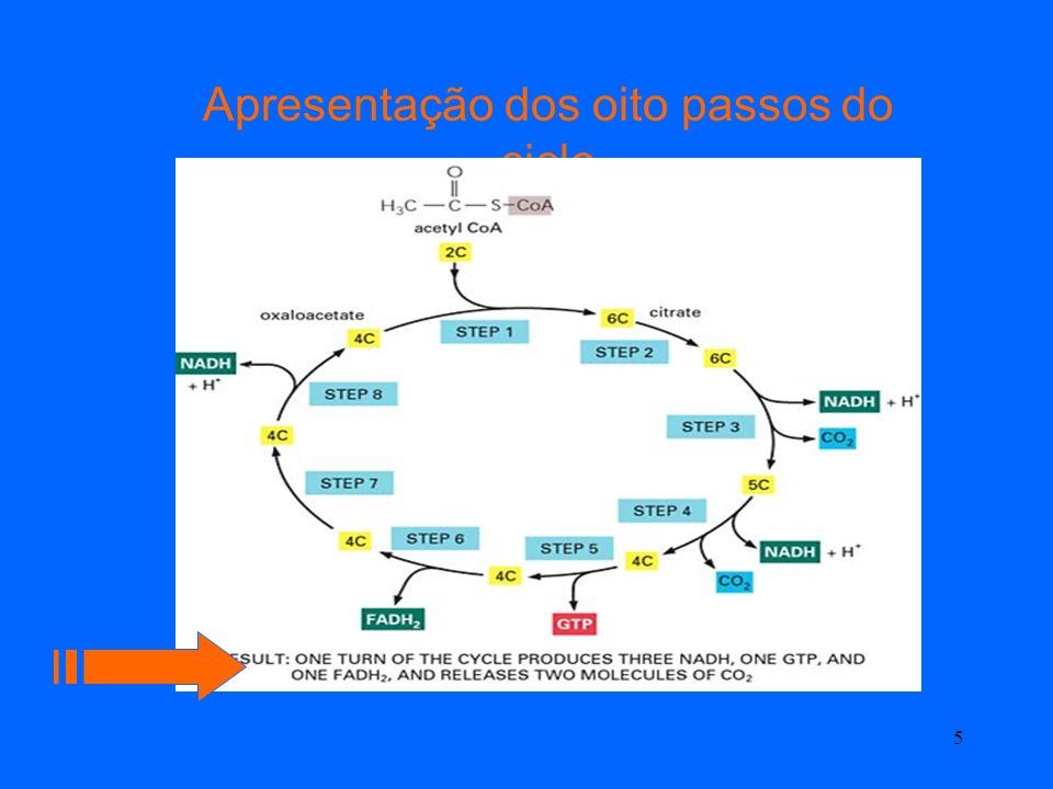 Apresentação dos oito passos do ciclo