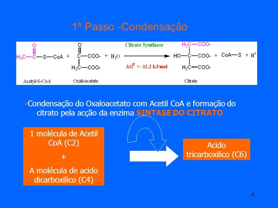 1º Passo -CondensaçãoCondensação do Oxaloacetato com Acetil CoA e formação do citrato pela acção da enzima SINTASE DO CITRATO.