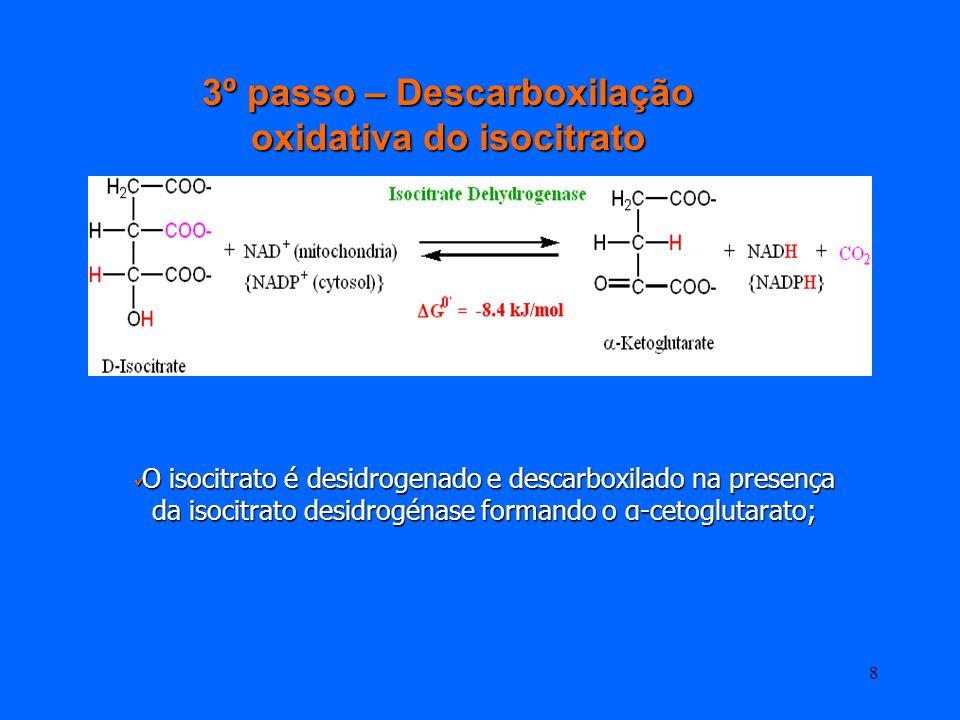 3º passo – Descarboxilação oxidativa do isocitrato