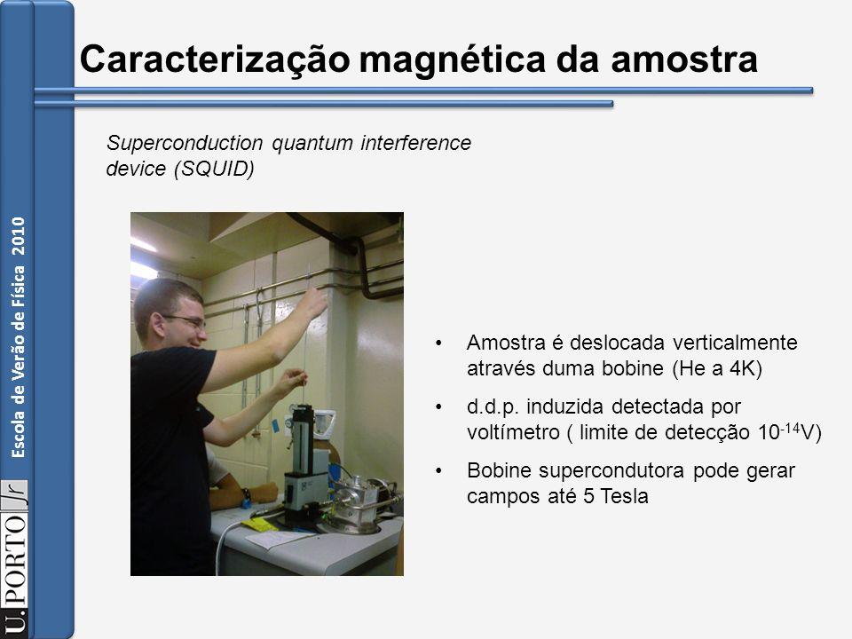 Caracterização magnética da amostra