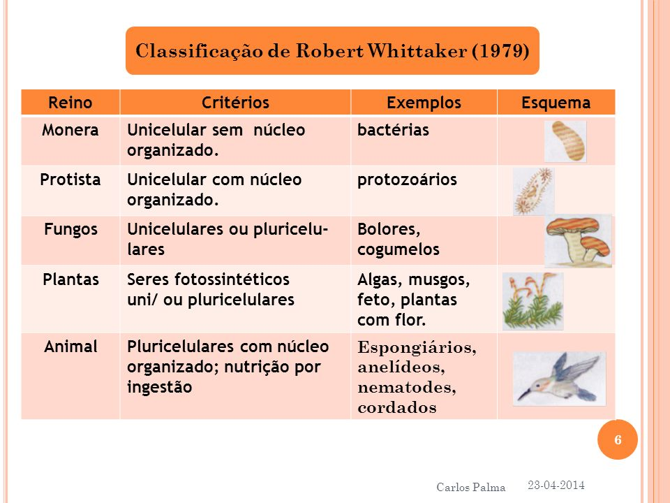 Classificação de Robert Whittaker (1979)