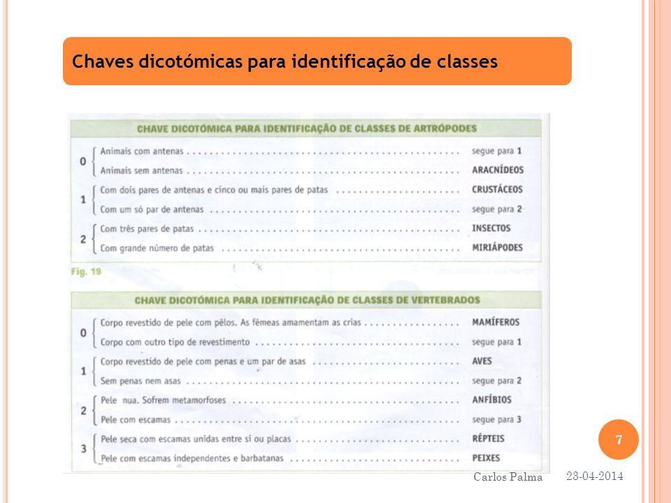 Chaves dicotómicas para identificação de classes