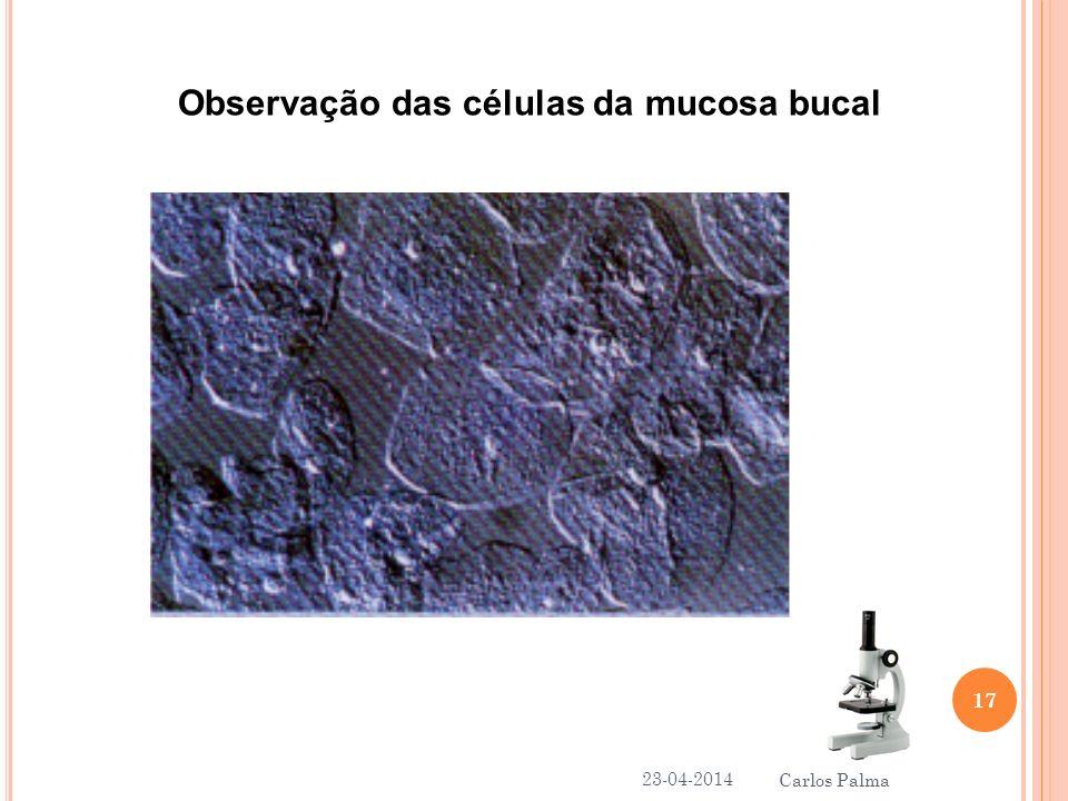 Observação das células da mucosa bucal