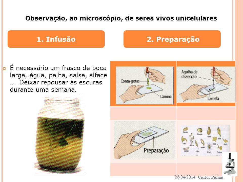 Observação, ao microscópio, de seres vivos unicelulares