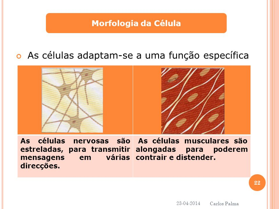As células adaptam-se a uma função específica