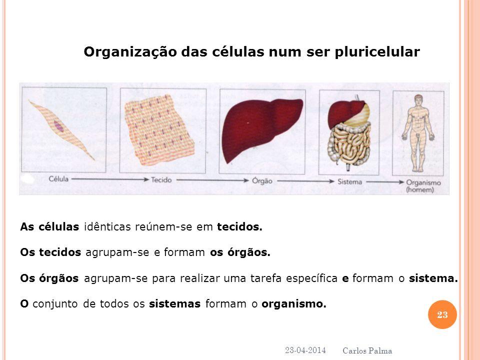 Organização das células num ser pluricelular
