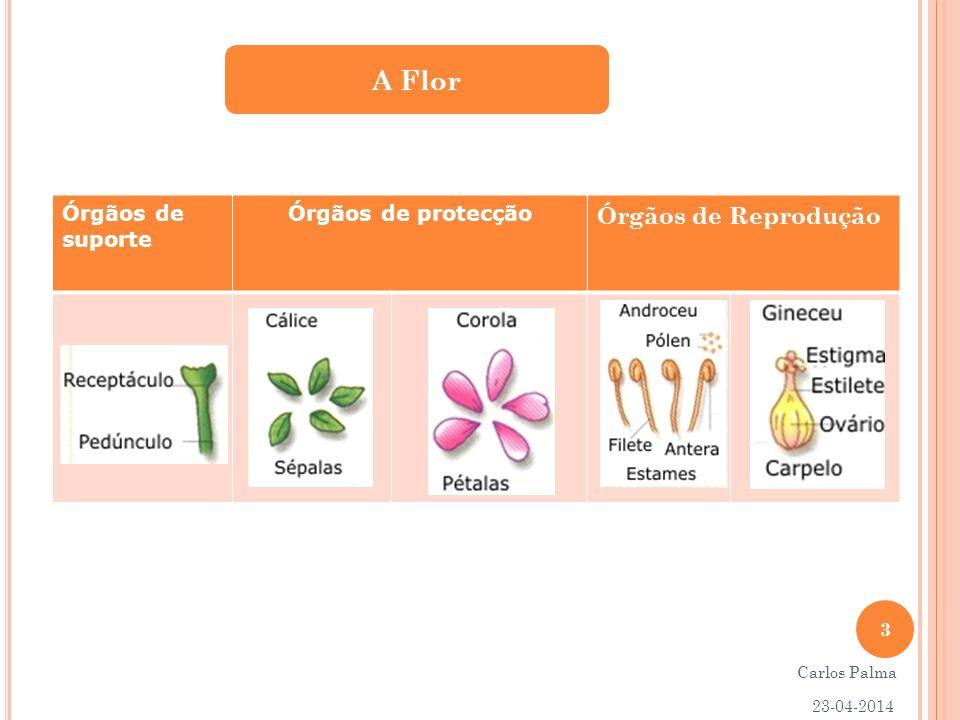 A Flor Órgãos de Reprodução Órgãos de suporte Órgãos de protecção