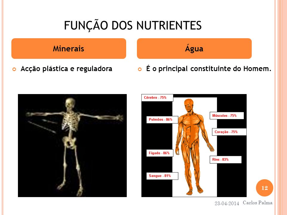 FUNÇÃO DOS NUTRIENTES Minerais Água Acção plástica e reguladora