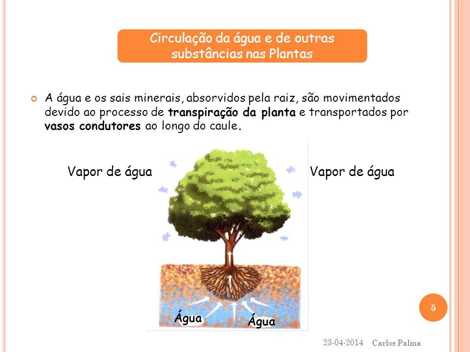 Circulação da água e de outras substâncias nas Plantas
