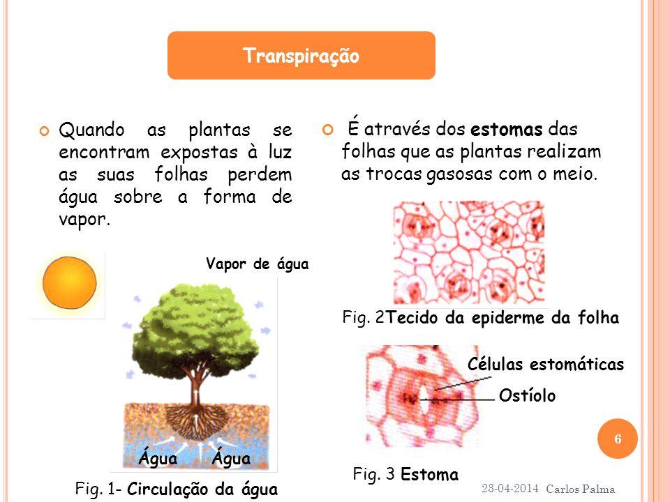 Transpiração É através dos estomas das folhas que as plantas realizam as trocas gasosas com o meio.