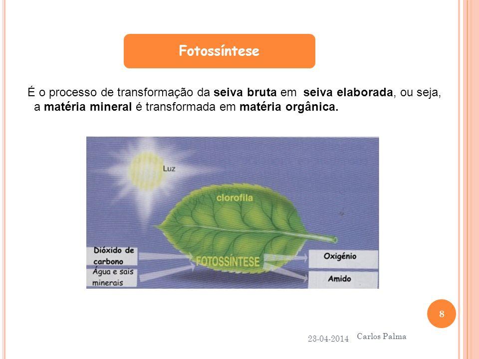 Fotossíntese É o processo de transformação da seiva bruta em seiva elaborada, ou seja, a matéria mineral é transformada em matéria orgânica.