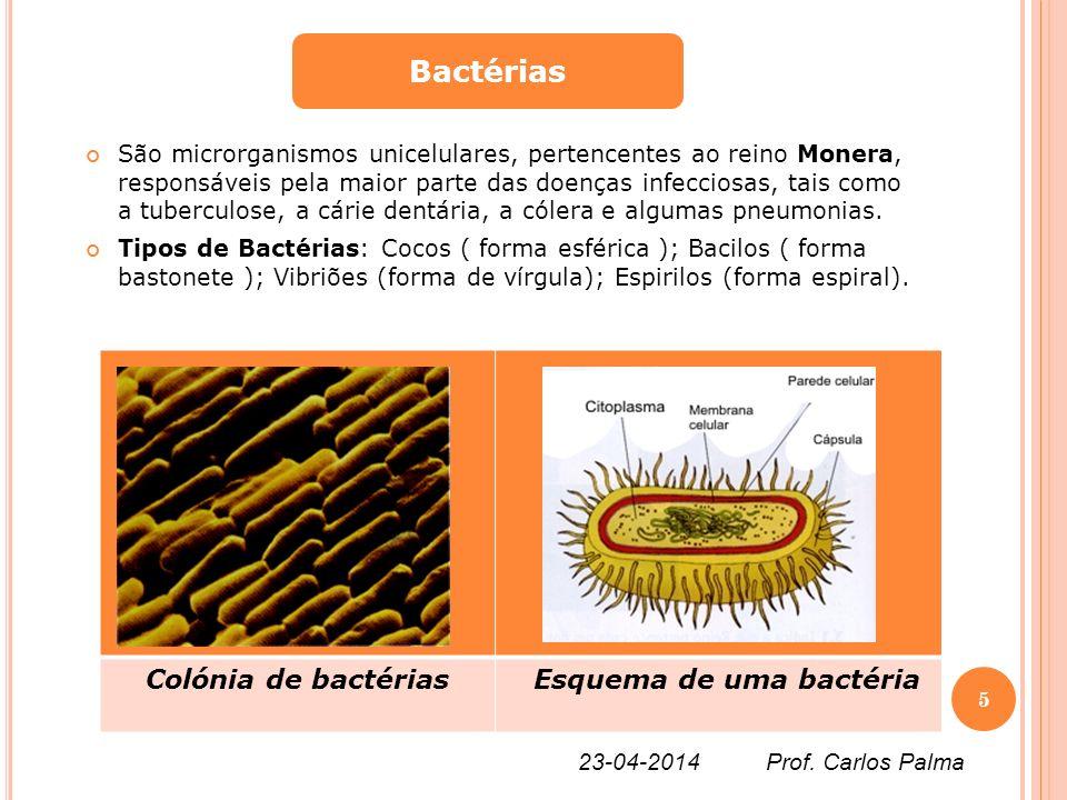 Bactérias Colónia de bactérias Esquema de uma bactéria
