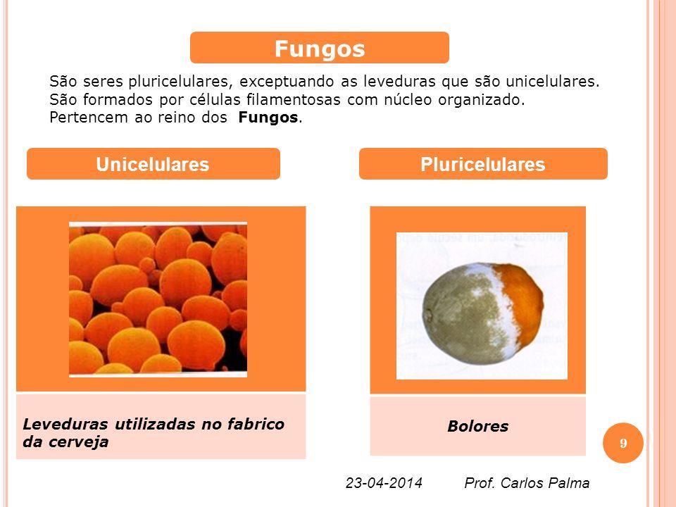 Fungos Unicelulares Pluricelulares