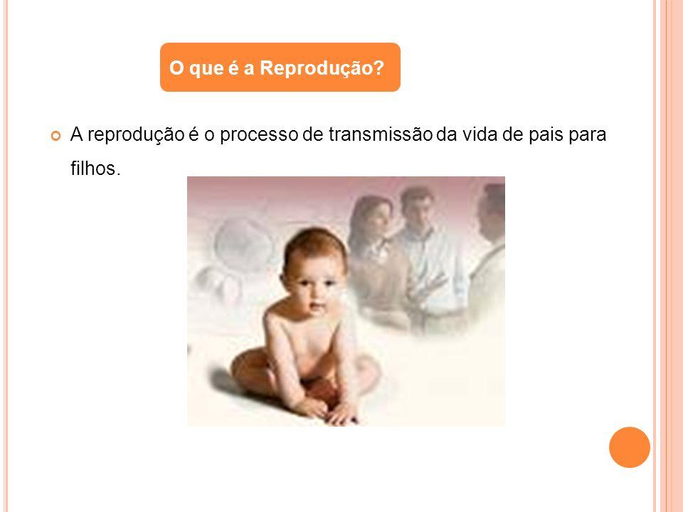 O que é a Reprodução A reprodução é o processo de transmissão da vida de pais para filhos.