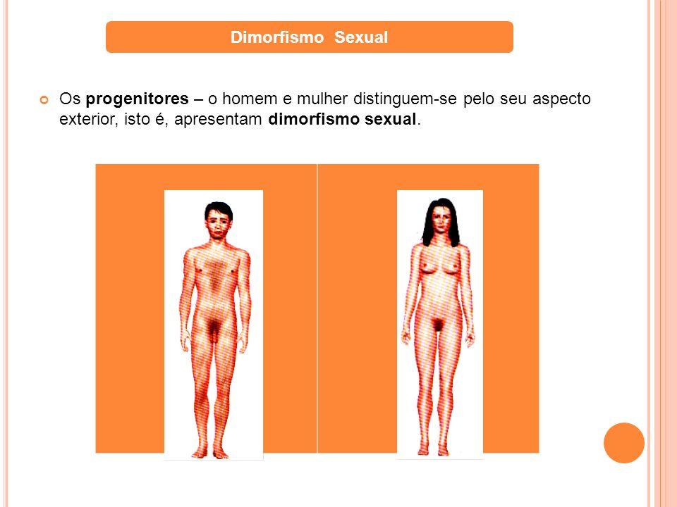 Dimorfismo SexualOs progenitores – o homem e mulher distinguem-se pelo seu aspecto exterior, isto é, apresentam dimorfismo sexual.