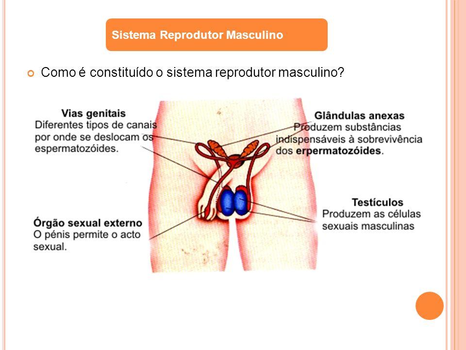 Como é constituído o sistema reprodutor masculino