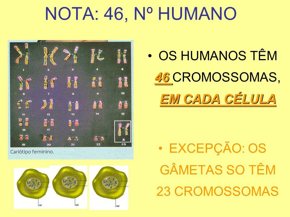 NOTA: 46, Nº HUMANO OS HUMANOS TÊM 46 CROMOSSOMAS, EM CADA CÉLULA