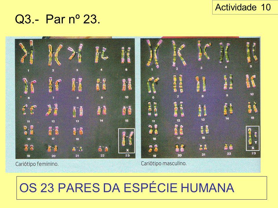 OS 23 PARES DA ESPÉCIE HUMANA