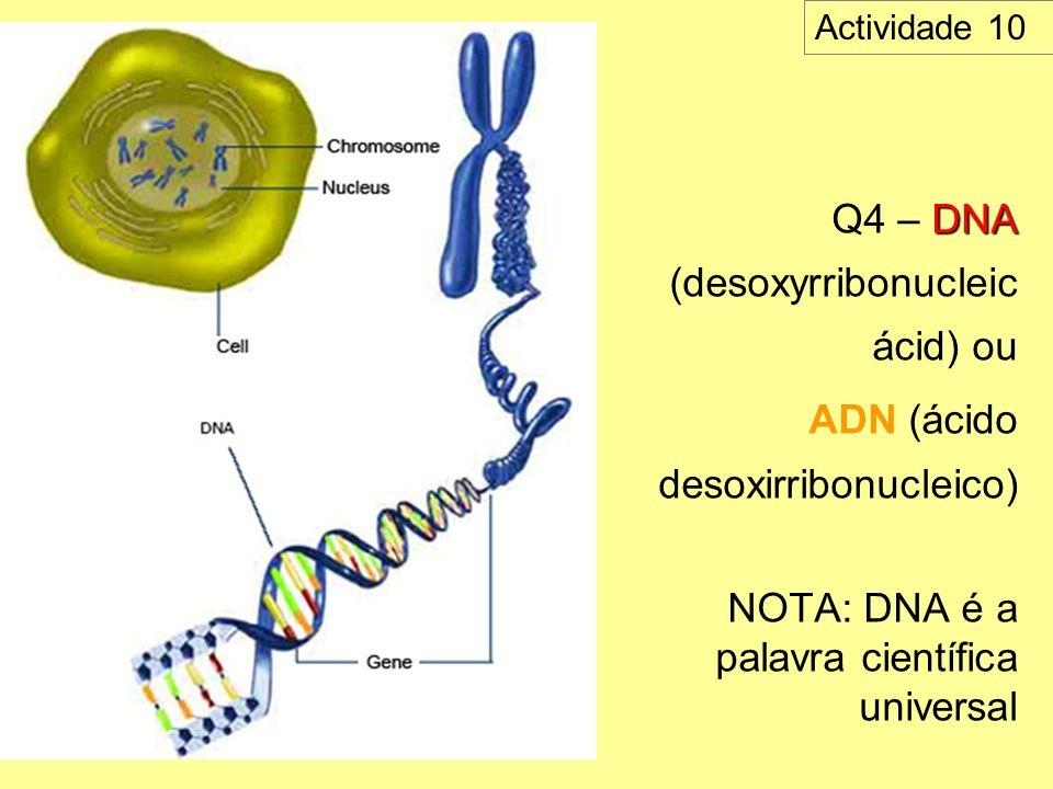 Q4 – DNA (desoxyrribonucleic ácid) ou
