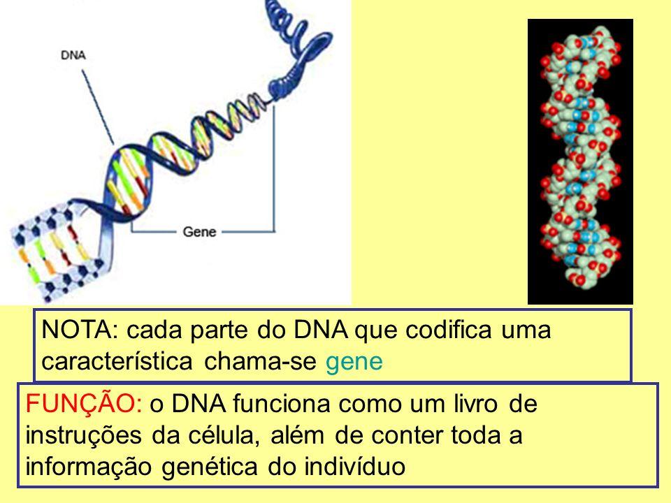 NOTA: cada parte do DNA que codifica uma característica chama-se gene