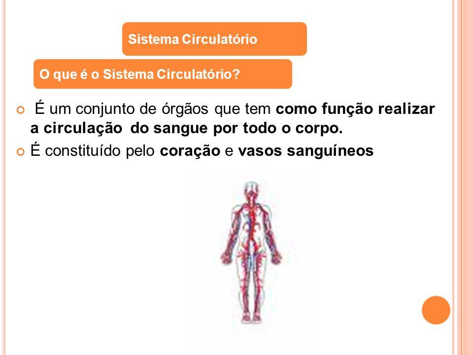 É constituído pelo coração e vasos sanguíneos